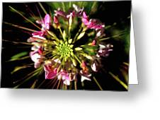 Flowerworks Greeting Card
