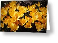 Flowery Sunshine Greeting Card