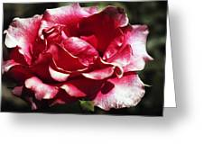 Flowing Flower Greeting Card