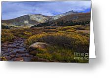 Flowing From Bierstadt Greeting Card by Barbara Schultheis