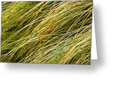 Flowing Green Grass  Abstract Greeting Card