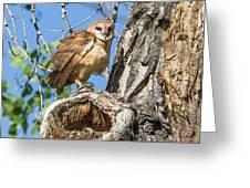Fluffed Up Barn Owl Owlet Greeting Card