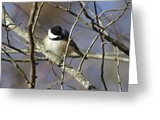 Fluffy Chickadee Greeting Card