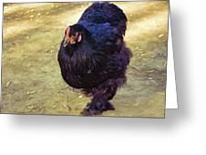 Fluffy Chicken Greeting Card