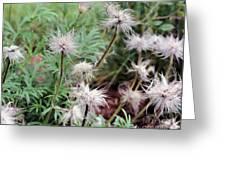 Fluffy Flowers Greeting Card