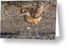 Fluffy Long-billed Curlew Greeting Card