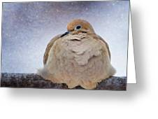 Fluffy Mourning Dove Greeting Card