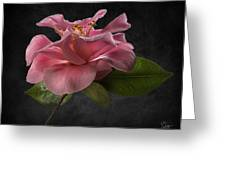 Fluffy Pink Camellia 2 Greeting Card