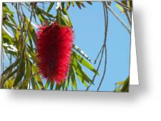 Fluffy Reds At The Library Greeting Card