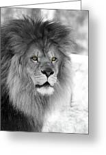 Fluffy Tango  Black And White  T O C Greeting Card