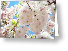 Fluffy White Pink Sunlit Tree Blossom Art Print Canvas Baslee Troutman Greeting Card