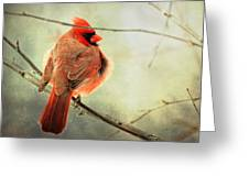 Fluffy Winter Cardinal Greeting Card