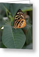 Flutter-by Greeting Card