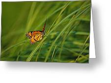 Fluttering Through The Summer Grass Greeting Card