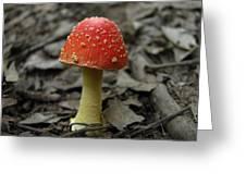 Fly Agaric Mushroom Greeting Card