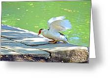 Fly Away Duck Greeting Card