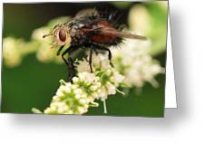 Fly Beauty Greeting Card
