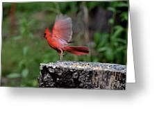 Fly Birds 318 Greeting Card