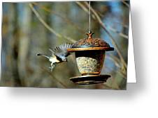 Fly Birds 324 Greeting Card