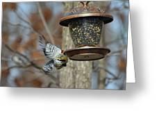 Fly Birds 326 Greeting Card