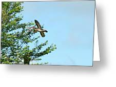 Fly Birds 329 Greeting Card