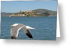 Fly By... Greeting Card