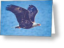 Fly By Eagle. 3 Of 3 Greeting Card