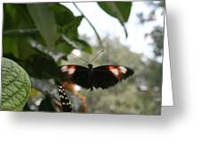 Fly Free - Black, Orange, White Butterfly Greeting Card