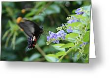 Fly In Butterfly Greeting Card