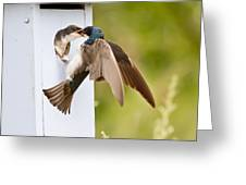 Fly In Meal Greeting Card