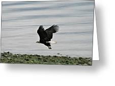 Fly Like An Eagle Greeting Card