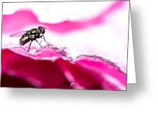 Fly Man's Floral Fantasy Greeting Card by T Brian Jones