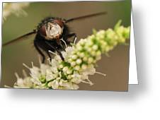 Fly Nectar Greeting Card