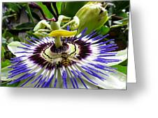 Fly On A Passion Flower Greeting Card