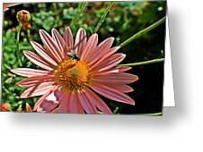 Fly On Flower Greeting Card
