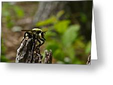 Fly On Mountain Greeting Card
