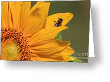 Fly On Sunflower Greeting Card