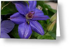 Fly On The Clematis Greeting Card