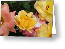 Fly On The Roses Greeting Card by Terry  Wiley