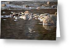Flycatcher Hunting On The Buffalo River Greeting Card
