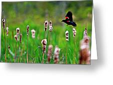 Flying Amongst Cattails Greeting Card