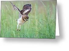 Flying Baby Burrowing Owl Greeting Card