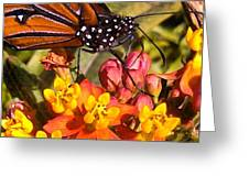 Flying Beauty Greeting Card