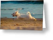 Flying Dog Greeting Card