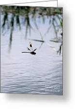 Flying Dragonfly Over Pond With Reeds Greeting Card
