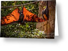 Flying Foxes Greeting Card