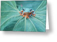Flying Frog Wallace Greeting Card