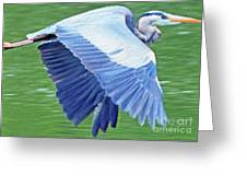 Flying Great Blue Heron Greeting Card