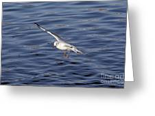 Flying Gull Greeting Card by Michal Boubin
