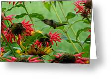 Flying Hummer Greeting Card